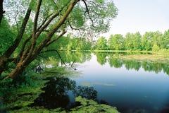 老池塘 免版税图库摄影