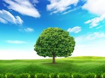 多云绿色天空结构树 免版税库存图片