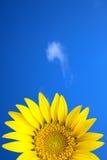 在黄色之下的蓝色花天空星期日 免版税库存照片