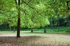 森林横向预留 免版税库存照片