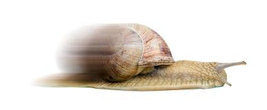 快速蜗牛 库存照片