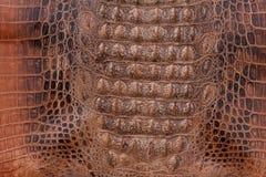 鳄鱼皮革纹理 图库摄影
