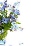 美丽的蓝色开花勿忘草 库存图片