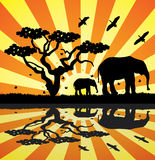 животные Африки Стоковое Изображение RF