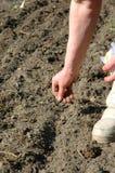 засевать семян Стоковые Фото