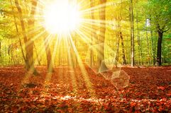 星期日结构树森林 库存照片