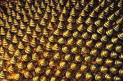 τρίχωμα του Βούδα Στοκ φωτογραφία με δικαίωμα ελεύθερης χρήσης