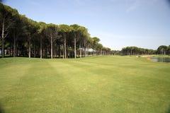 зеленый цвет травы гольфа клуба Стоковые Фотографии RF