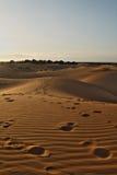 下午沙漠延迟撒哈拉大沙漠 免版税库存图片