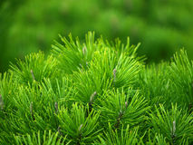 背景绿色结构树 库存照片