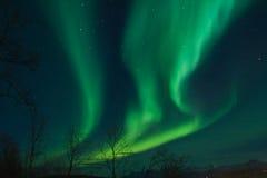 северное сияние освещает северные свирли Стоковое Фото