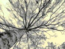 神秘的结构树 库存图片
