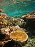 水下障碍巨大礁石的场面 免版税图库摄影