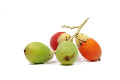 槟榔树果子 免版税图库摄影