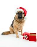 собака рождества Стоковые Изображения