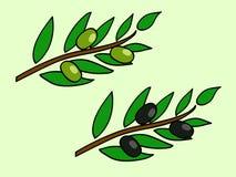 早午餐橄榄 免版税库存照片
