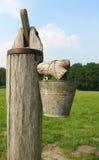 泵 免版税图库摄影