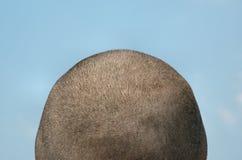 蓝色题头被刮的天空 免版税图库摄影