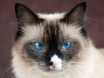 ζωική γάτα Στοκ Φωτογραφίες