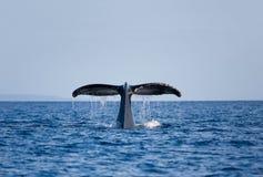 鲸鱼尾标 免版税图库摄影