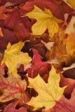 秋天背景叶子 库存照片