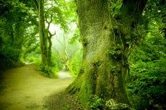 森林路 免版税库存照片