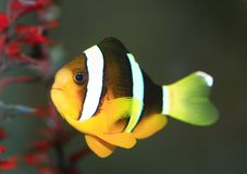 鱼 库存照片