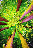 δέντρο θόλων Στοκ Εικόνα
