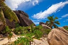 джунгли тропические Стоковая Фотография