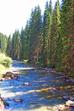ήρεμες σκιές ποταμών πεύκω Στοκ Εικόνα