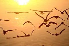 γλάροι πτήσης Στοκ φωτογραφία με δικαίωμα ελεύθερης χρήσης