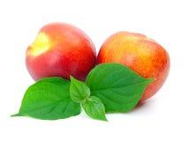 留下桃子成熟 图库摄影