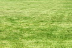 剪切新鲜的草坪 库存图片