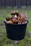 时段蘑菇 免版税库存照片