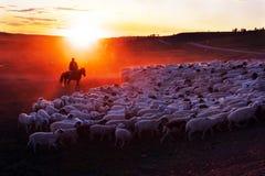 牧羊人 库存照片