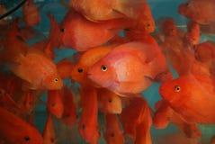 鱼 库存图片