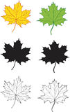 комплект клена листьев Стоковые Изображения