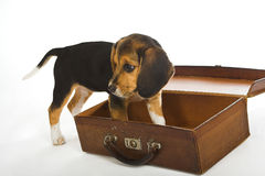 狗旅行 库存图片