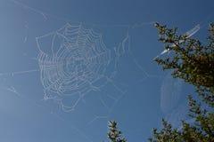 ιστός αράχνης Στοκ Εικόνες