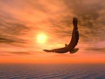 παραλλαγή αετών Στοκ φωτογραφίες με δικαίωμα ελεύθερης χρήσης