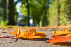 тротуар листьев осени Стоковое Изображение