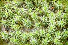 мох Стоковые Изображения