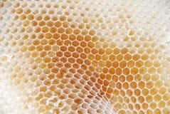 μέλι χτενών Στοκ Εικόνα