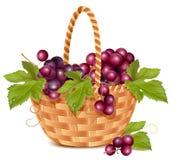 виноградина пука корзины свежая Стоковые Фото