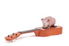 音乐家啮齿目动物 库存图片