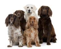 группа собак Стоковая Фотография