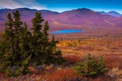 высокогорная тундра Стоковое Фото