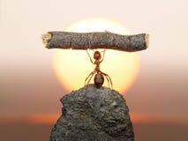 蚂蚁文明人工雕象 库存照片