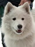 狗 免版税库存照片