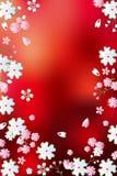 提取红色背景的开花 库存照片